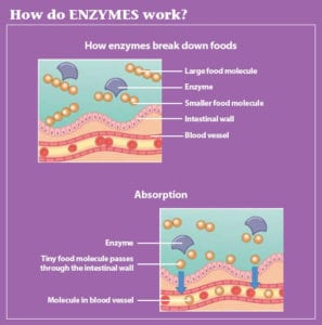 enzyme function